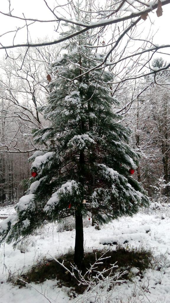 Der besondere Einzelbaum